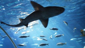 Shark-Weeks-Gardaland-SEA-LIFE-Aquarium