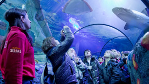 SEA LIFE Aquarium_17_squali